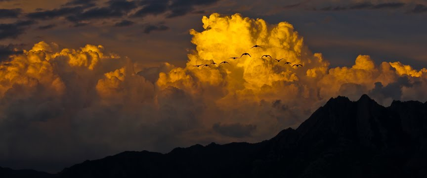 mount olympus geese sunset, Муррей