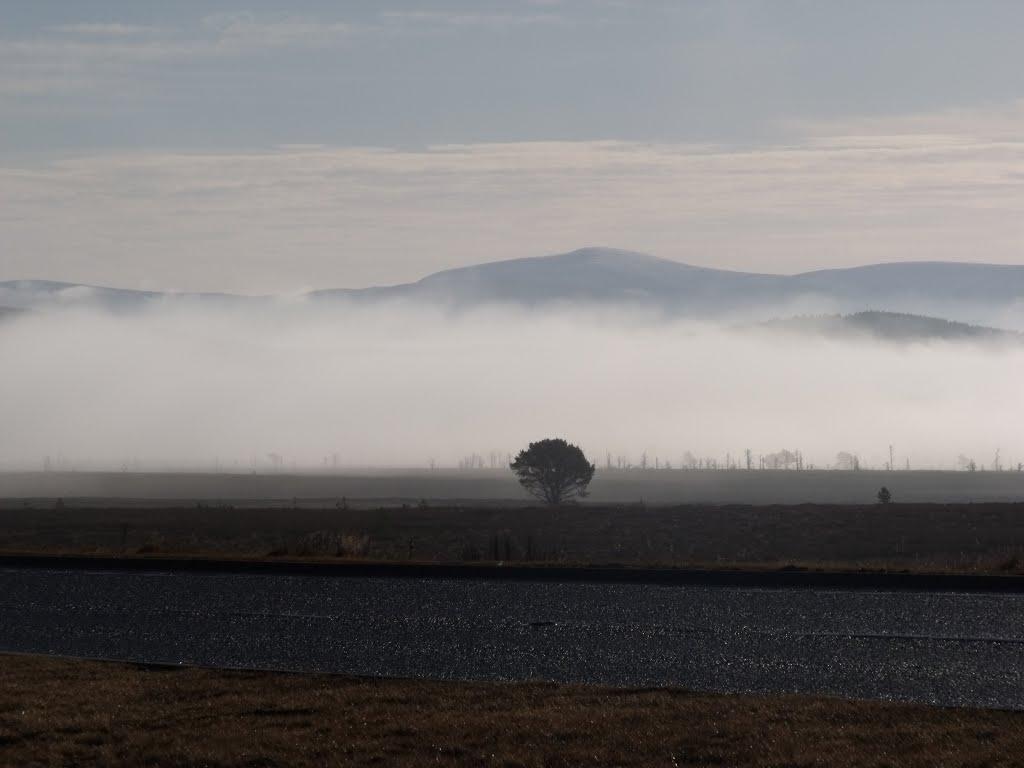 Tree In Mist, Авимор