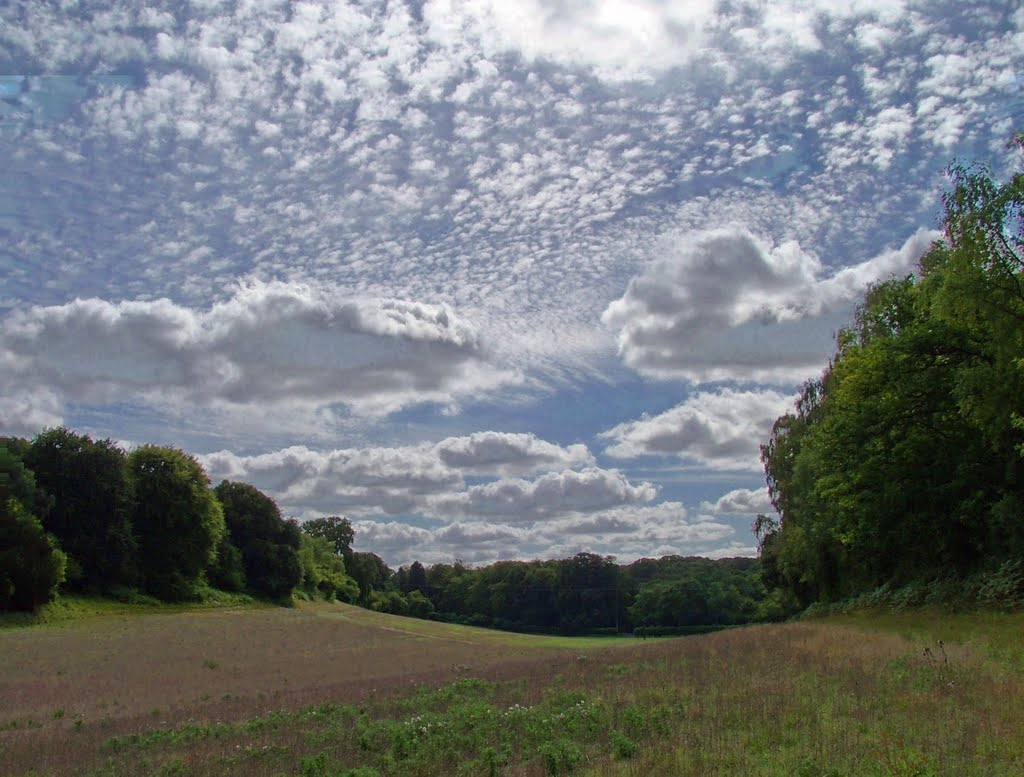 Field in Harewood Forest, Андовер