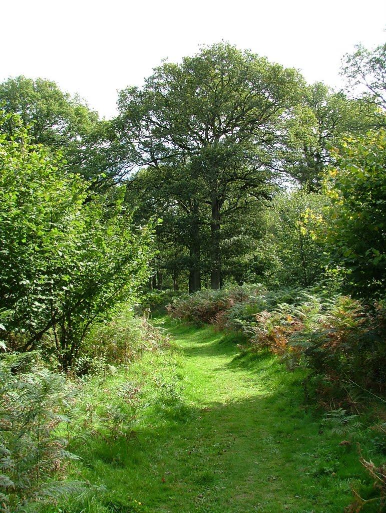 Harewood Forest, September, Андовер