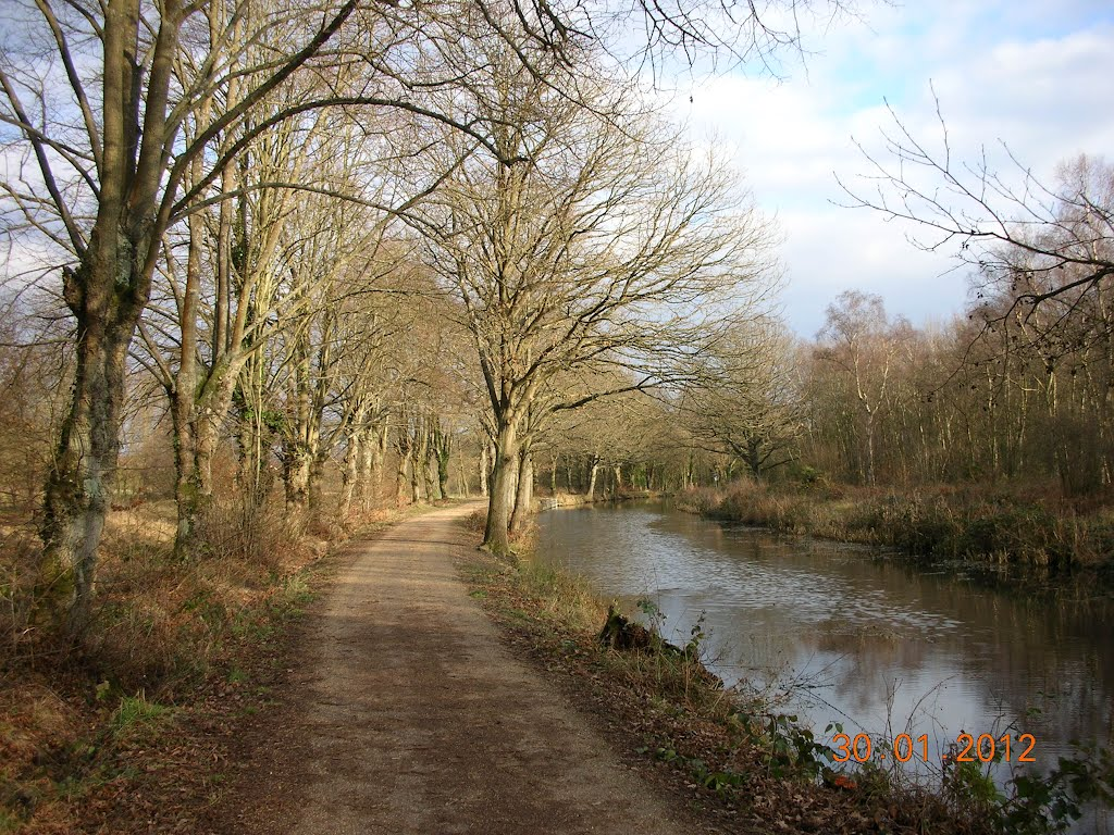 Basingstoke Canal near Brookwood, Басингсток