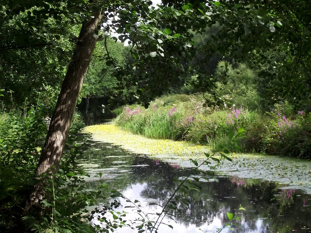 Basingstoke Canal between Woking and Brookwood, Басингсток