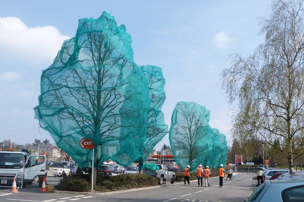 Trees for the chop - Sainsburys - Apl 13, Басингсток
