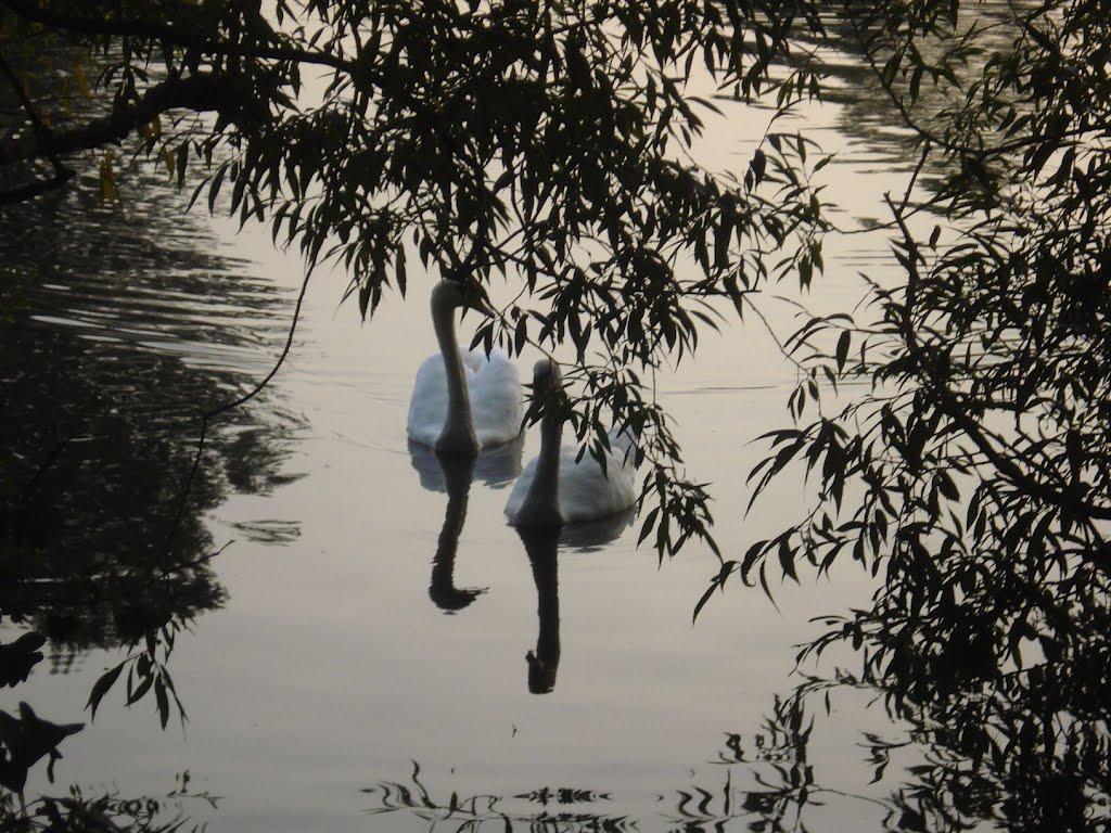 Love on Danson Park Lakes, Бексли