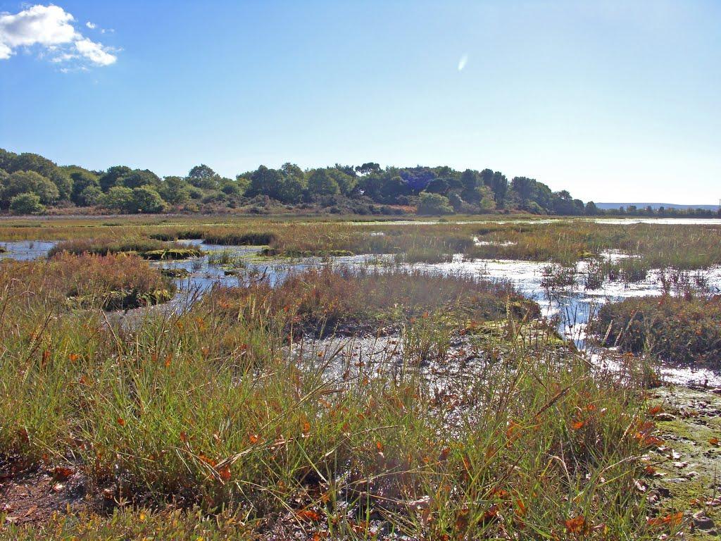 Marshes near Upton Country Park, Ватерлоо