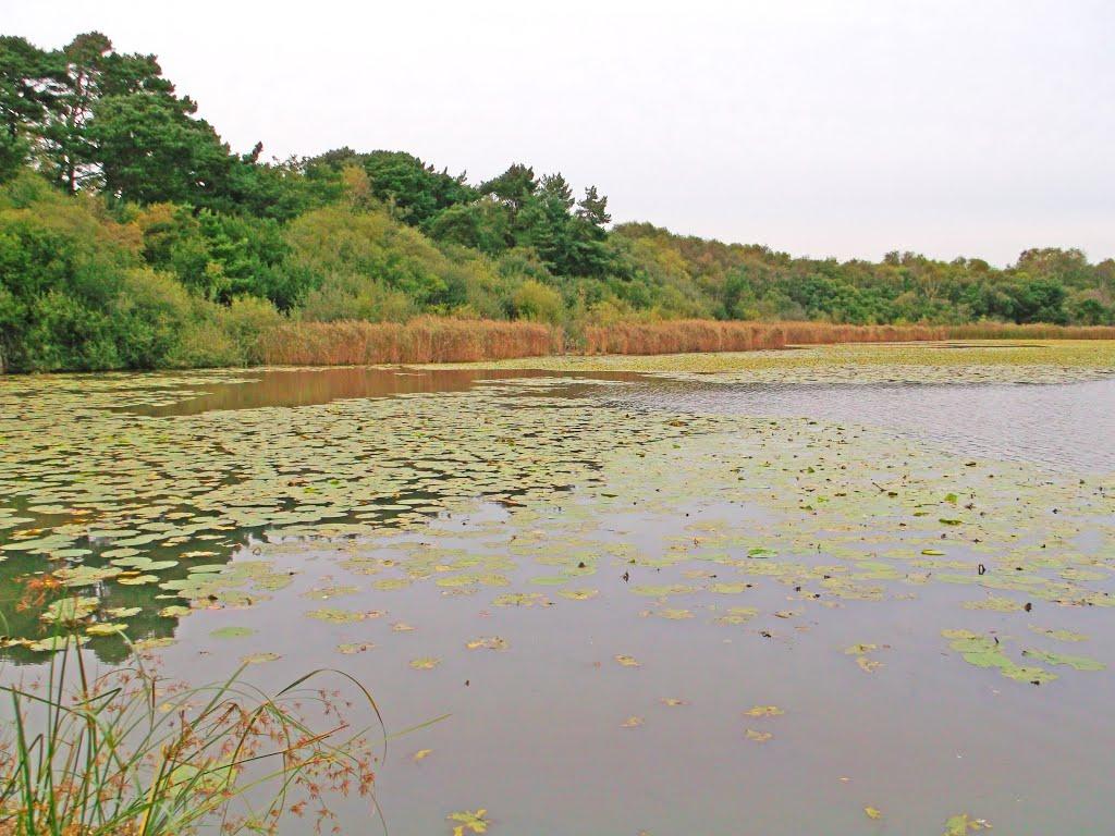 Hatch Pond, Ватерлоо