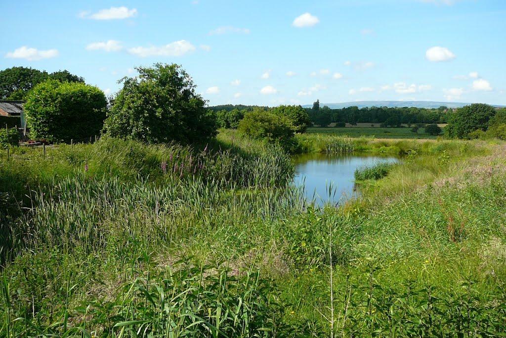 Pond (private land), Голборн