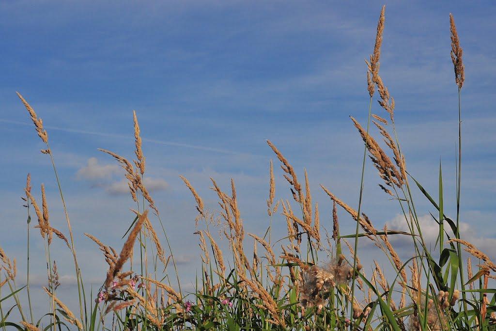 Grasses, Голборн