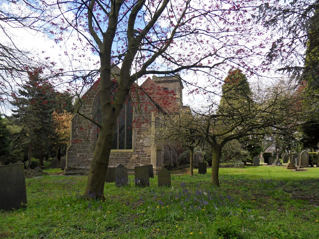 Sibson village churchyard is full of trees., Макклесфилд