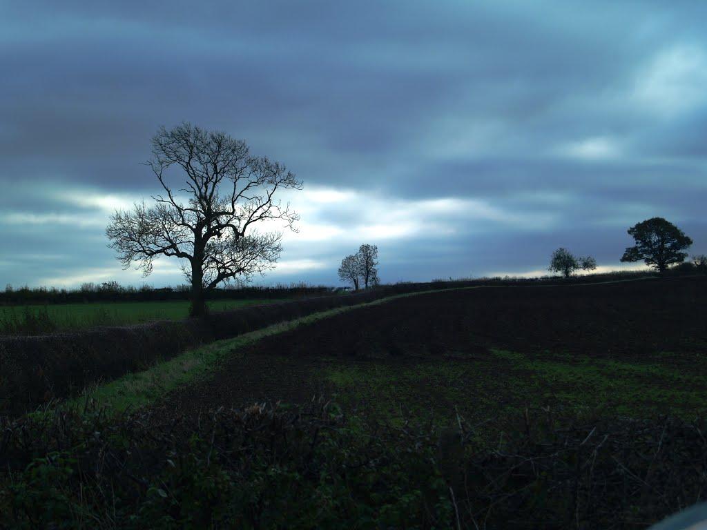 Trees on the field boundry near Sibson., Пензанк
