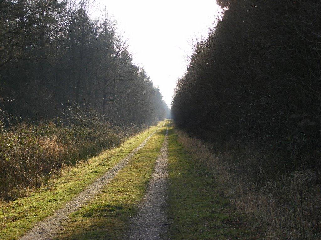 Long walk, Рагби