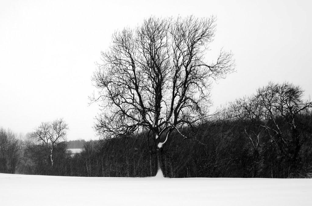 Sutton Meadow, Саттон-ин-Ашфилд