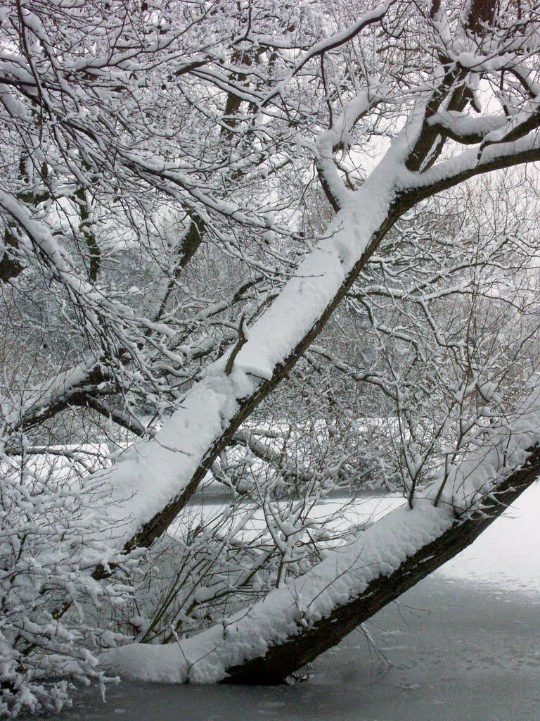 Poynton Pool in Winter, Хазел-Гров