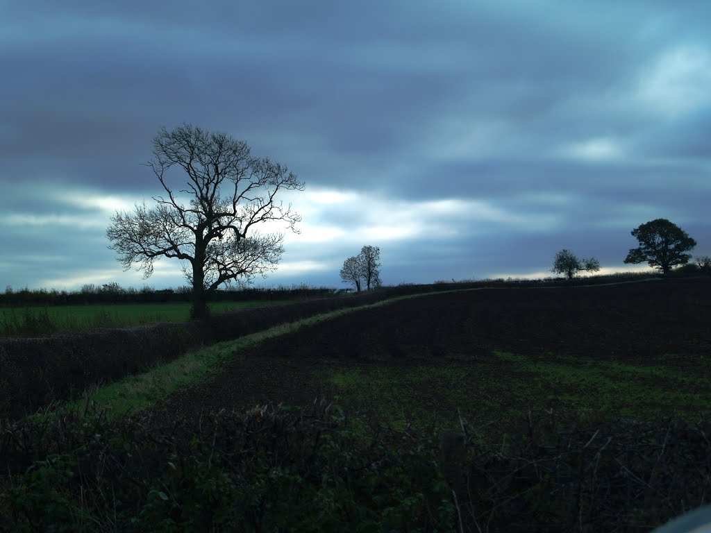 Trees on the field boundry near Sibson., Хейлсовен