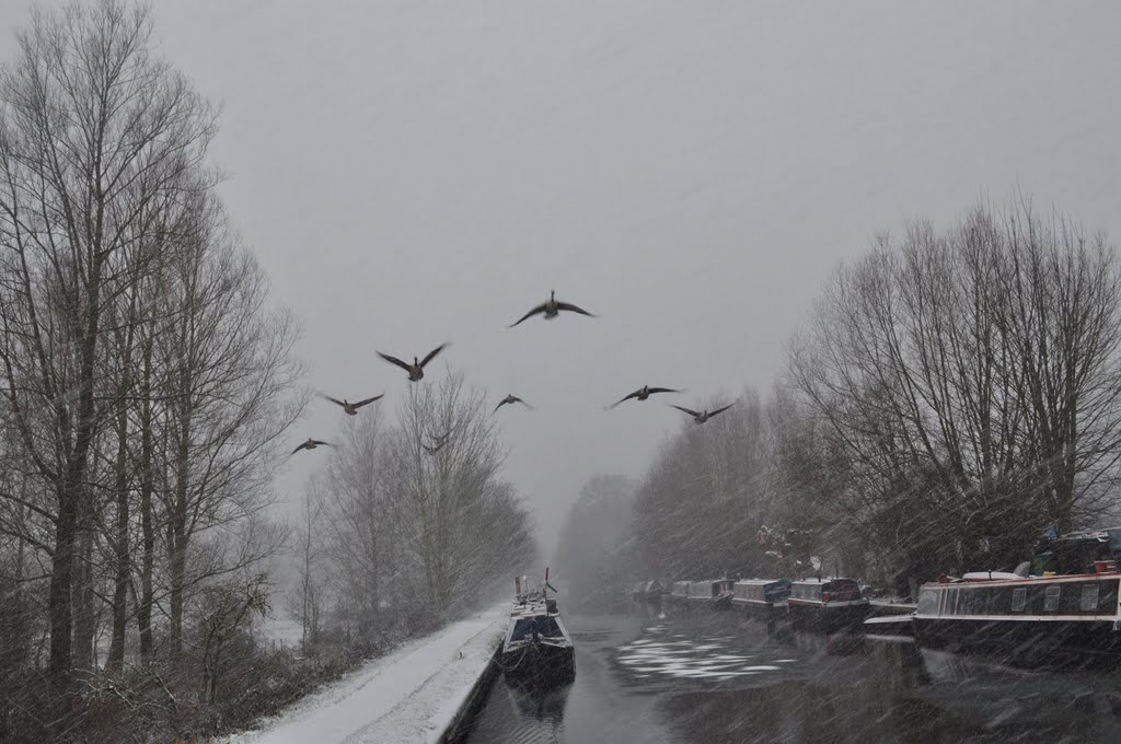 Geese over Grand Union Canal, Хемел-Хемпстед