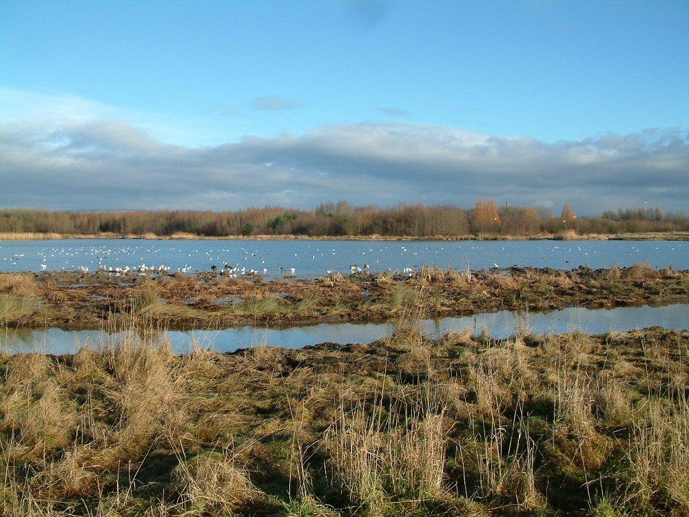 Amberswood lake 2, Хиндли