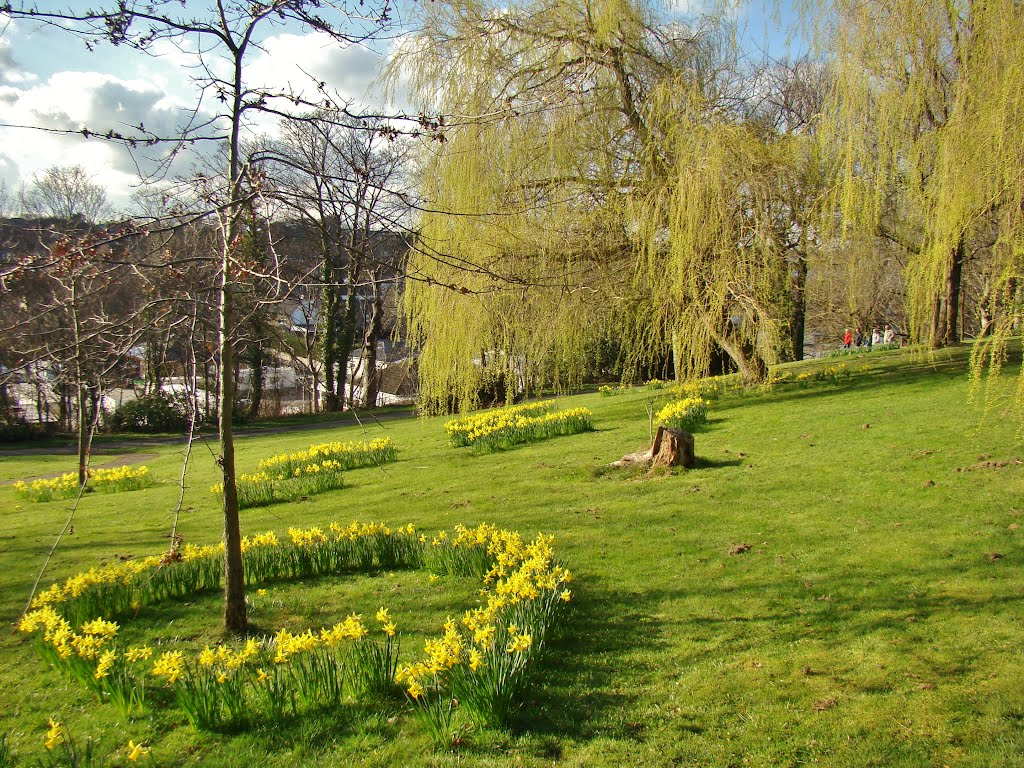 Springtime scene on Chapeltown Park slope, Sheffield S35, Чапелтаун
