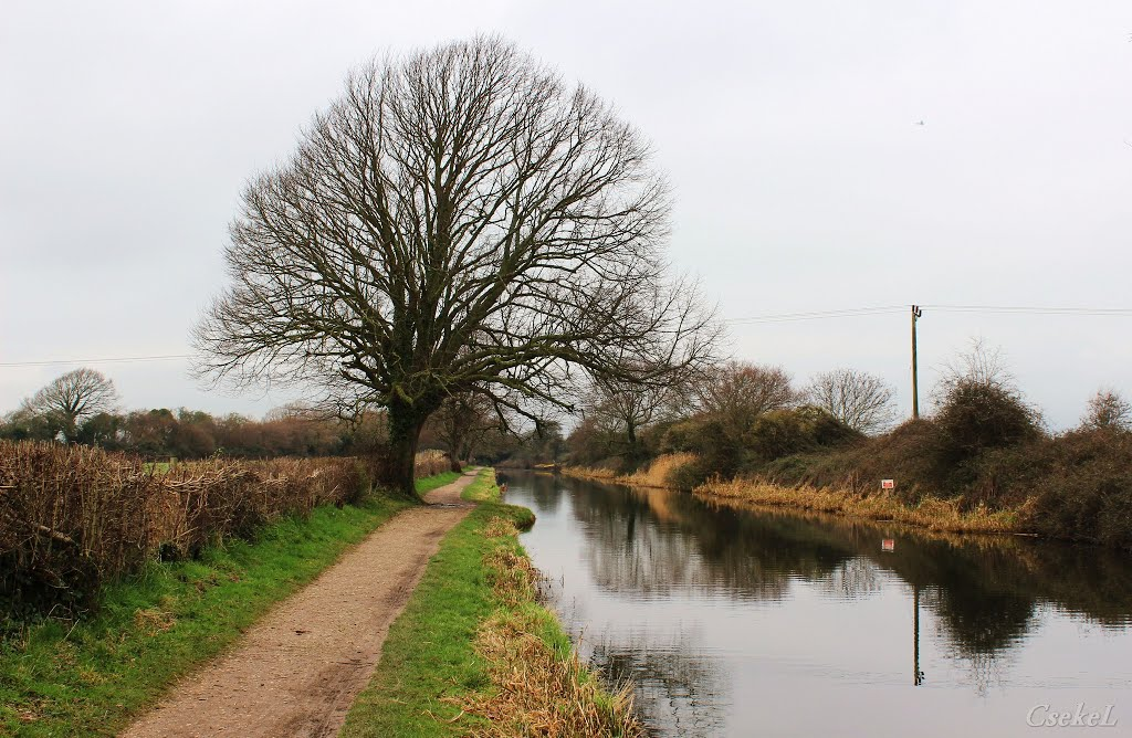 Kanális (Chichester Canal), Чичестер