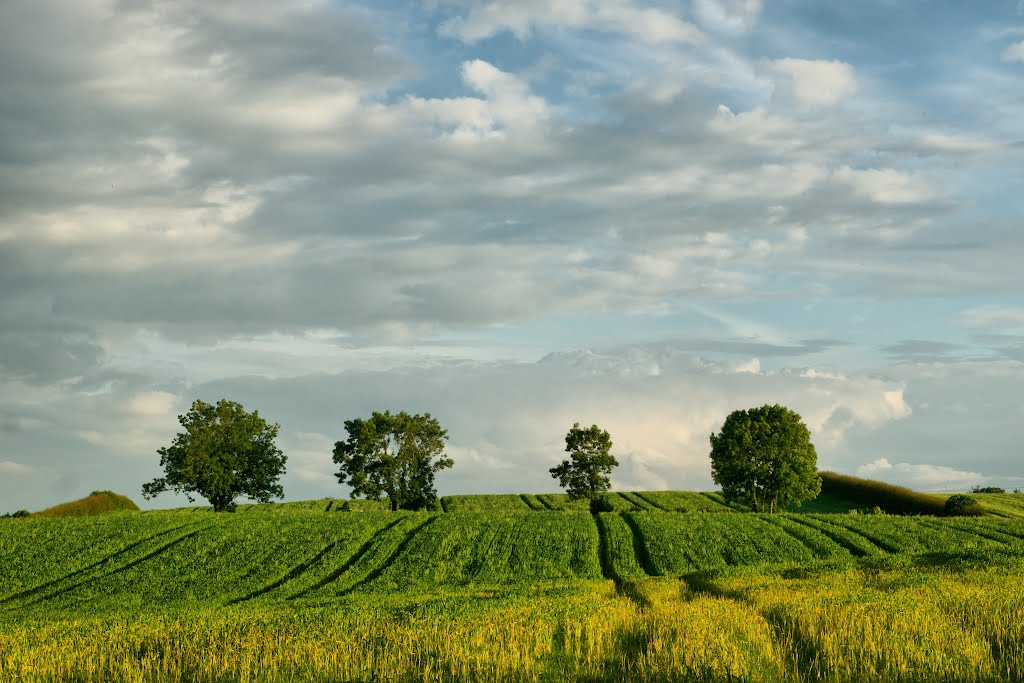 fields behind cookstown, Колерайн