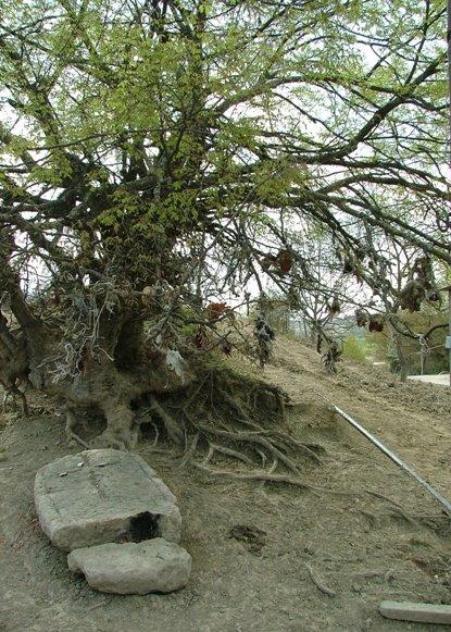 A sacrificial tree, Taghavart, Martuni region, Nagorno-Karabakh Republic, Казах
