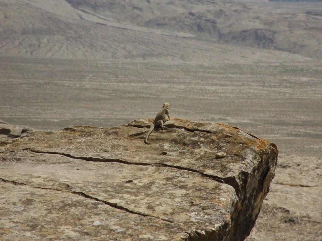 Lizard kingdom, Биласувар