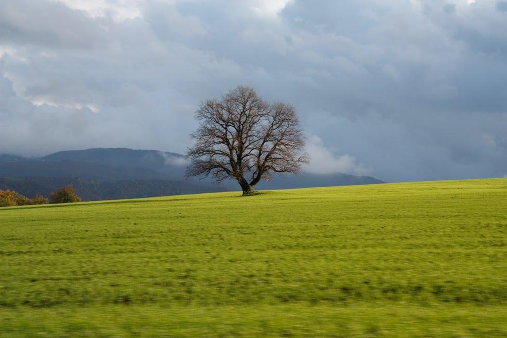 дерево, Артем-Остров
