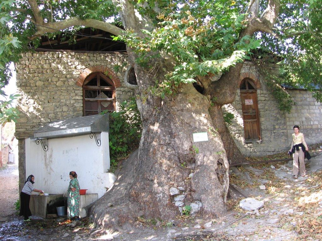Holly Tree, Артем-Остров