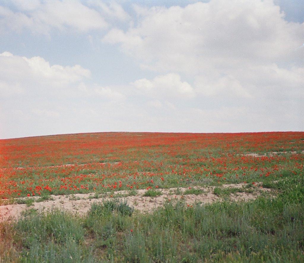 Kyzyl-Kiya, road to Abshir, spring, poppy, Балыкчи
