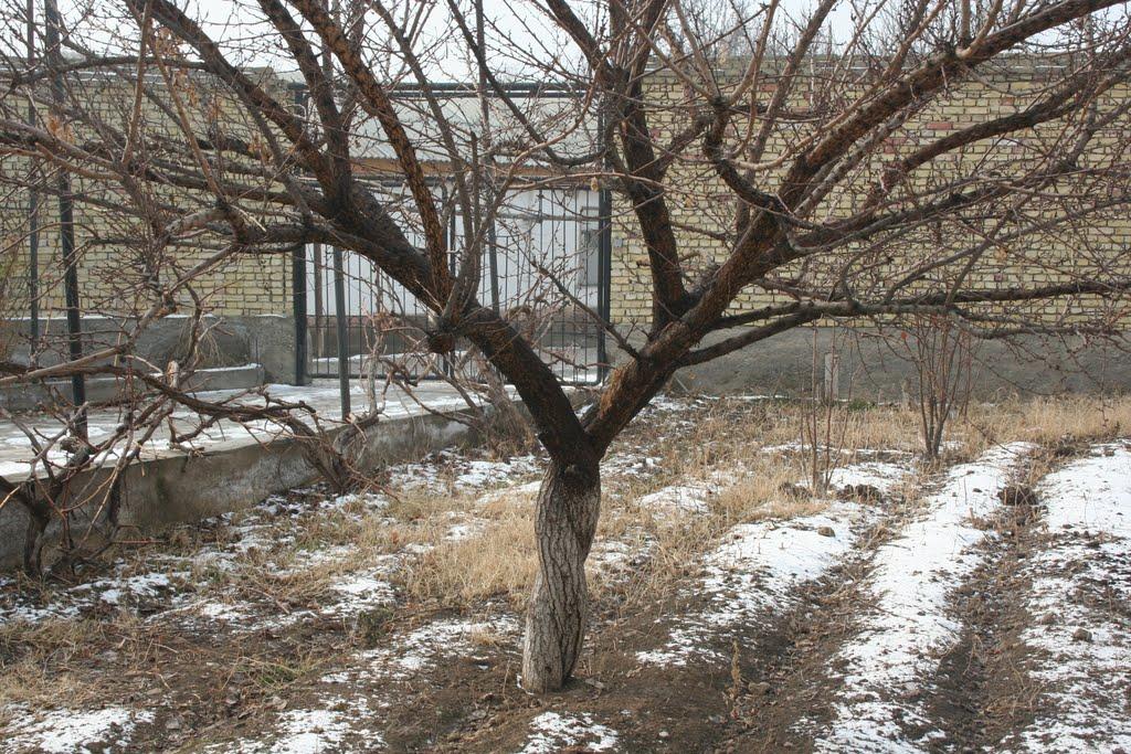 Деревья который посадил мой отец, Ленинск