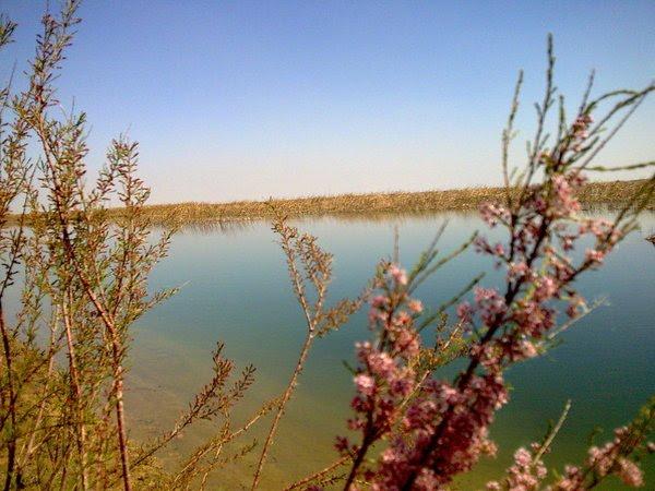 Spring in Khadichakol, Bukhara, Газли