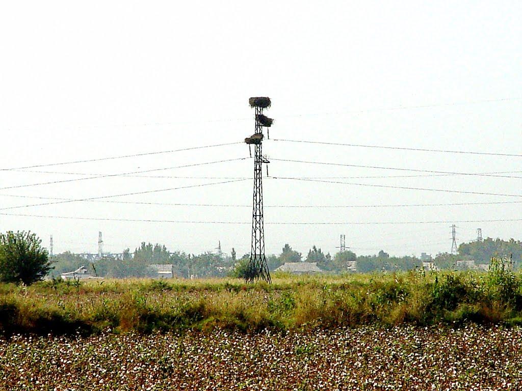 Сырдарьинская обл., гнезда на ЛЭП, Чиназ