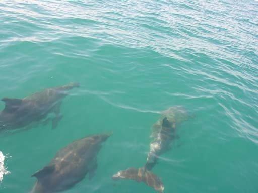 Dolphins, Балаклава