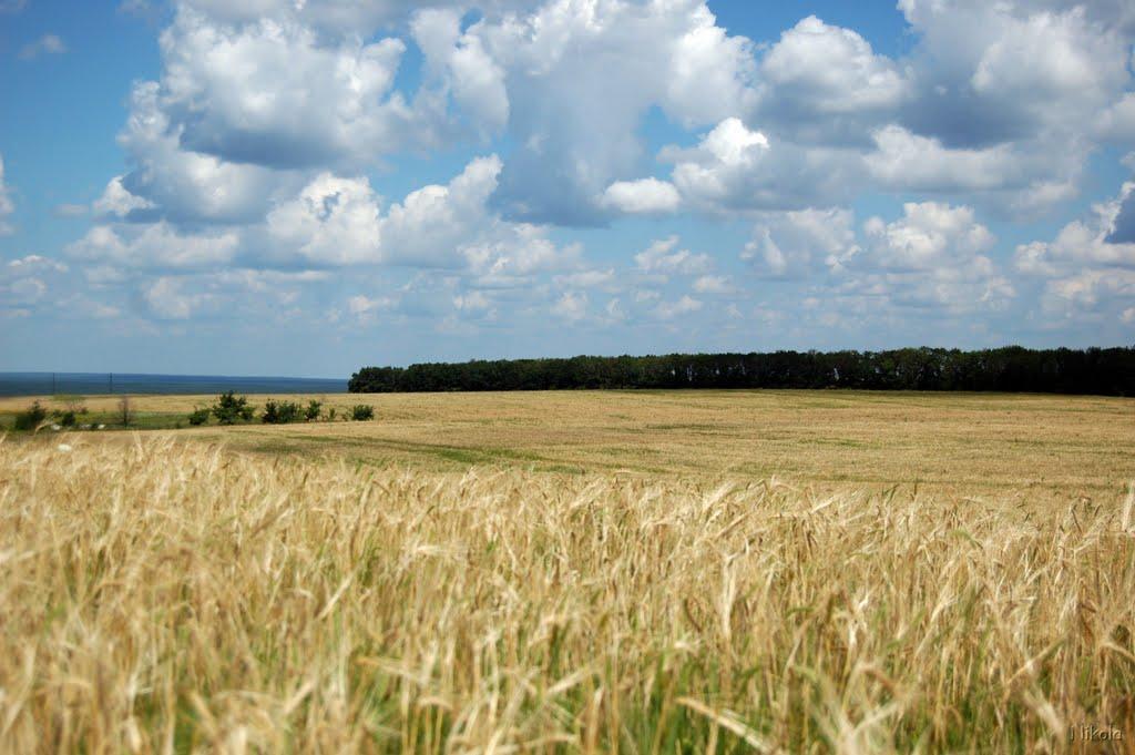 Летнее поле, Белогоровка
