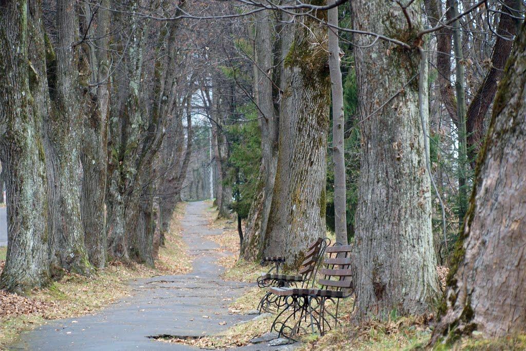 Аллея / A path, Трускавец