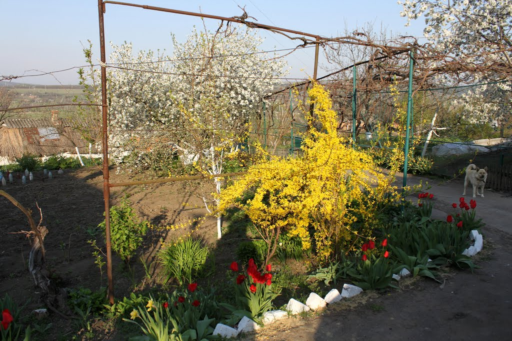 Весна в родном дворе., Ананьев