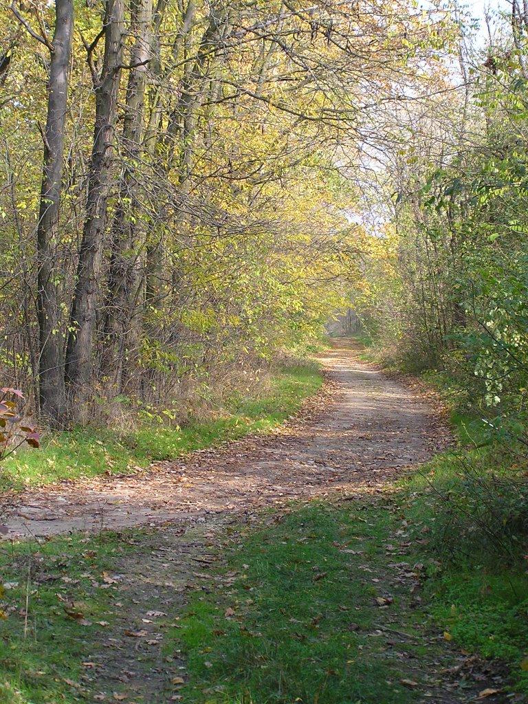Березовский лес, Березовка