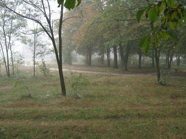 Парк в тумані, Владимирец