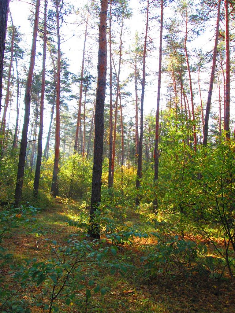 Волшебный лес, Борки