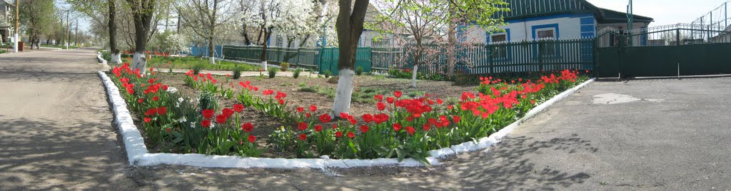 Улица Ленина, Апрель., Нижние Серогозы
